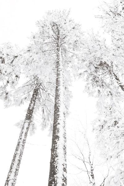 It's Cold Outside Winter Trees Nature On Your Doorstep White Trees Blackforest Hotzenwald WhiteCollection Snow ❄ Winter Wonderland
