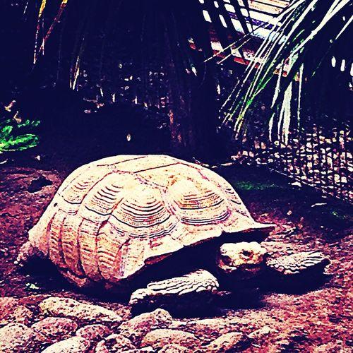 Turtle Grumpy Old Turtle Lazy Turtle