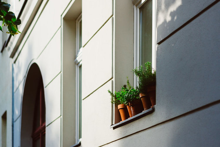 Low angle view of potted plant at window