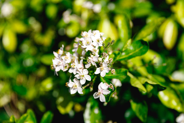 Autumn in London Flower Flowering Plant Fragility Freshness Plant Vulnerability  Beauty In Nature Growth Close-up Nature White Color Petal Flower Head Selective Focus Inflorescence Day Focus On Foreground No People Green Color Botany London Leaves Autumn Summer Travel Destinations