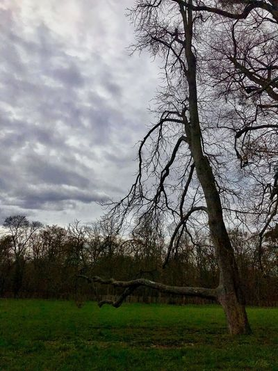 Versailles gardens Iphone7+ IPhone Photography Iphonephotography IPhoneography Versailles Gardens Sky And Clouds Sky Tranquil Scene Tranquility Outdoors Photograpghy  Outdoors Bare Tree Tree Trunk Tree Nature Photography Nature