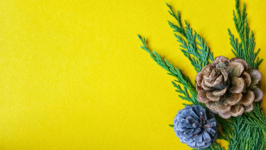 Backgrounds Bussiness EyeEmNewHere My Best Travel Photo EyeEm Selects Yellow Flower Close-up Plant Full Frame Sky Only Rough Dahlia Pollen Blooming Detail Leaf Vein Plant Bark Flower Head Bark Textured  LINE Natural Pattern In Bloom Fragility Growing Petal Fern Rugged Plant Life