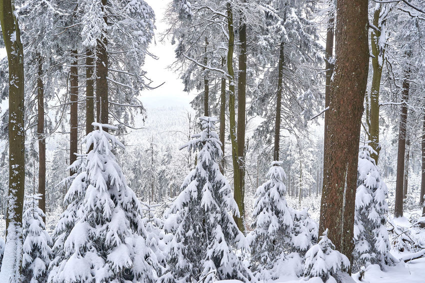 Beauty In Nature Cold Temperature Day Forest Growth Landscape Mountain Nature No People Non-urban Scene Outdoors Scenics Snow Tranquil Scene Tranquility Tree Tree Trunk White Color Winter