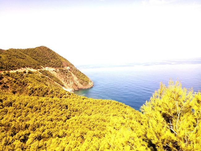 Sea Green Forest Tipaza Trees Sun Vacations Algeria Beauty No People Trees And Sky Voyages Sea And Sky Day Sky Blue Plant Clear Sky Beauty In Nature Summer Tourism Beauty In Nature Sky Wave Cloud - Sky Travel Destinations Horizon Over Water