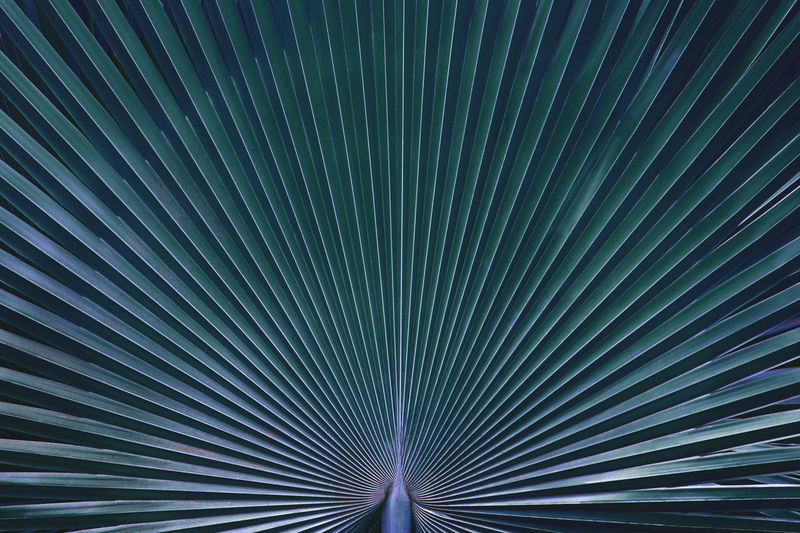 Tropical palm leaf in blue tone color natural pattern background