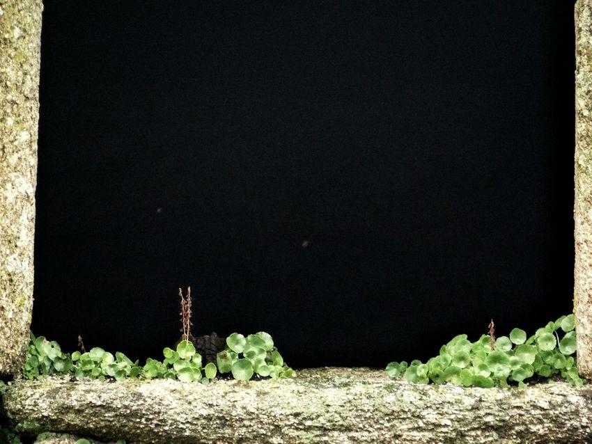 Barbie Green Stone Wall Plant Wallflower Anenome