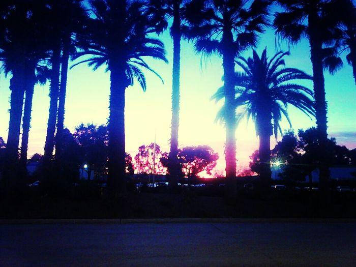 longbeach,ca sunset