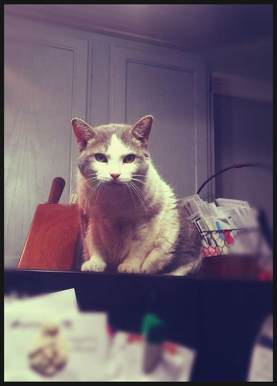 My Cat♥ I Love