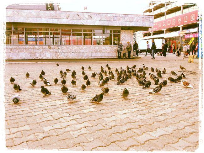 Новосибирск. Утро Street Streetphotography улица Новосибирск Novosibirsk City Novosibirsk птицы утро