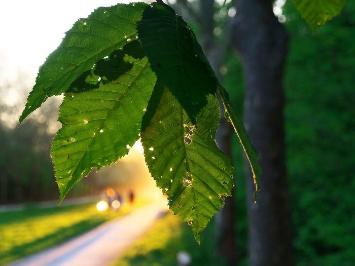 Close-up of leaf on tree