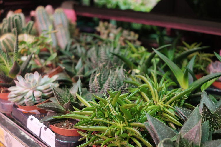 Close-up of potted plants in market