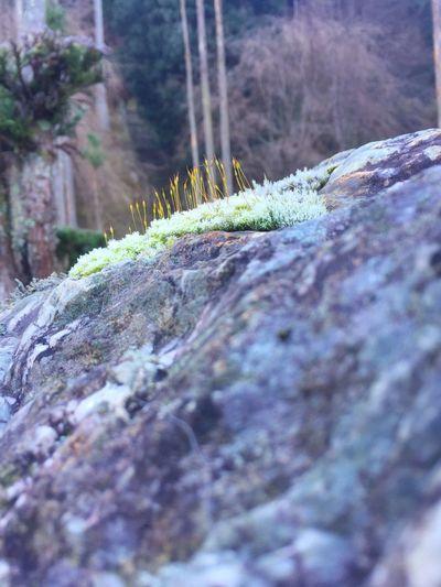 あけましておめでとうございます(^O^)/ 今年もどうぞよろしくお願いいたしますm(_ _)m Nature Beauty In Nature Moss Blue Sky Happynewyear Nature Winter