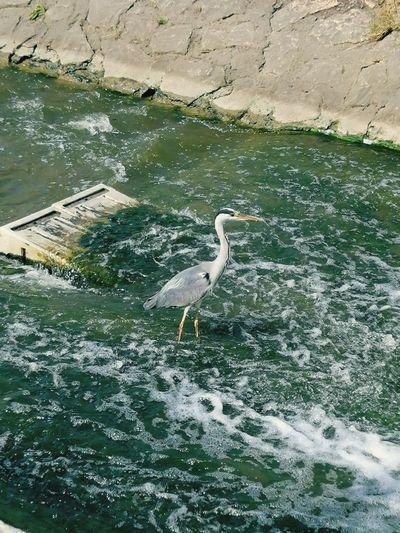 Seagull perching on a lake