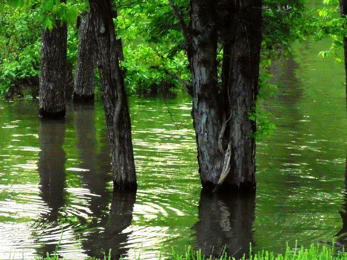 Ripples Lakeside
