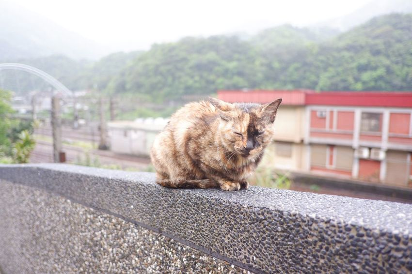 Cat Cat Village Aroundtheworld Travel Taiwan EyeEm Selects Animal Themes Mammal Animal One Animal Domestic Animals Domestic Vertebrate Pets Cat Feline Domestic Cat No People Day Nature Architecture Built Structure Transportation Relaxation Outdoors Focus On Foreground