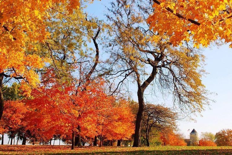 Fall November