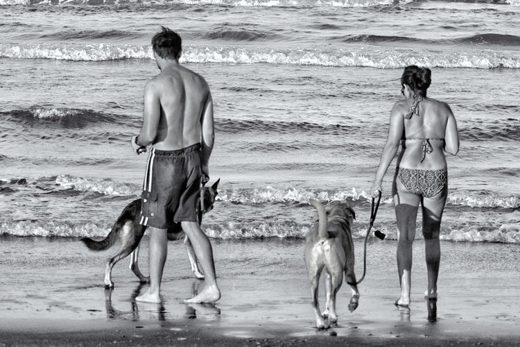 Couple with dogs standing on beach
