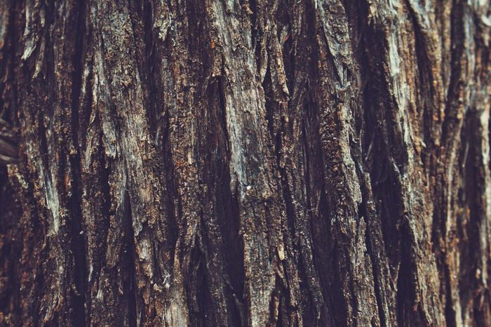Textures in nature pt 1 : bark Tree Trunk Tree Textured  Bark Close-up Backgrounds Full Frame Rough Nature Wood - Material Brown Day No People Outdoors Growth Australia South Australia Adelaide, South Australia Mambray Creek Flinders Ranges Outbackaustralia Outback Country Life EyeEm Selects EyeEmNewHere