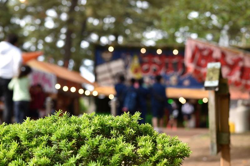 斜陽の酒田祭 Green Japan Japanese Traditional Matsuri SAKATA Festival Park Summer Sunset 屋台 祭り