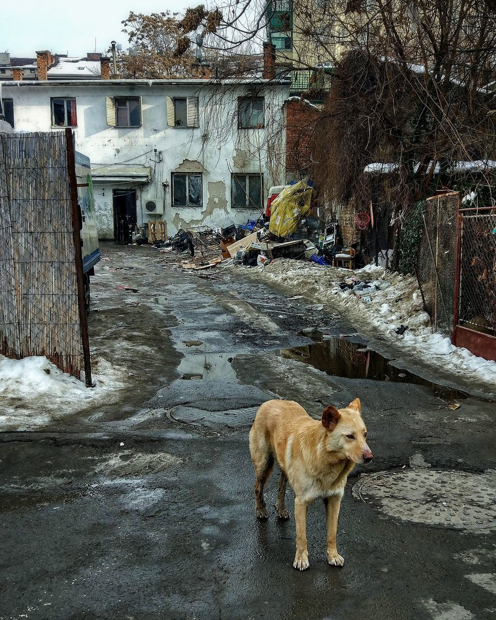 dog, pets, one animal, domestic animals, animal themes, mammal, built structure, architecture, winter, building exterior, outdoors, cold temperature, snow, day, no people