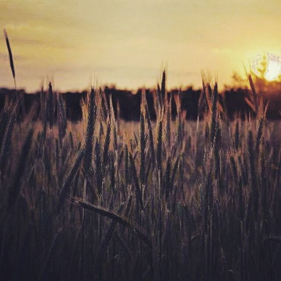 Memories Village Filed Nature Plants Landscape Eye4photography  Beautiful Poland Holiday Hello World ✌ Sunset Sun Sky
