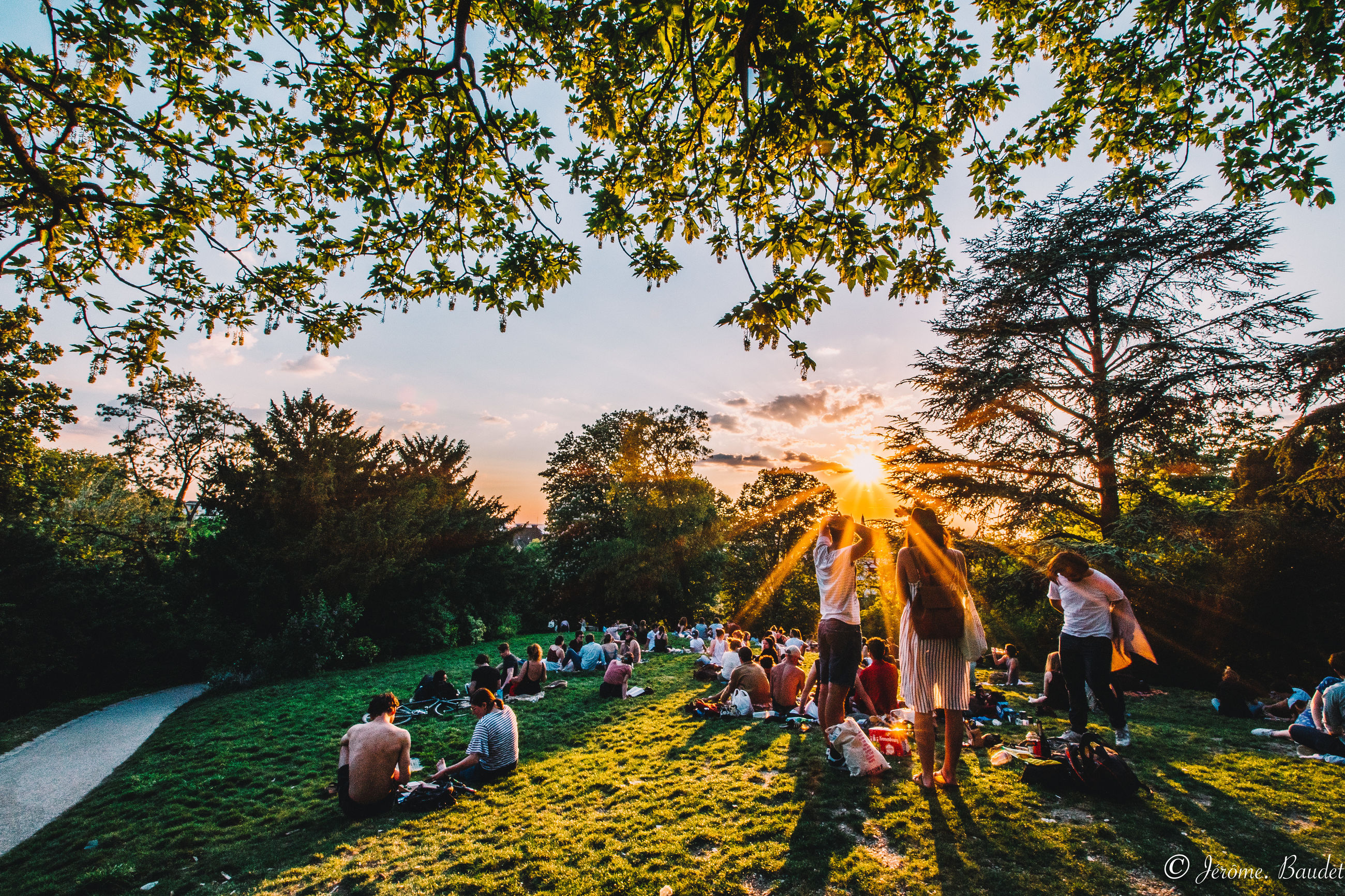 tree, crowd, plant, group of people, large group of people, real people, men, sky, women, nature, lifestyles, adult, leisure activity, grass, land, field, sunset, relaxation, sunlight, outdoors, sun