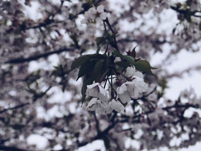 depth of field Plant Tree Growth Fragility Flower Flowering Plant Beauty In Nature Close-up Low Angle View