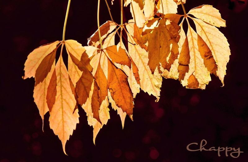 🍂 Hanging No People Nature Plant Leaf Plant Part Outdoors Sunlight Day Beauty In Nature Leaves