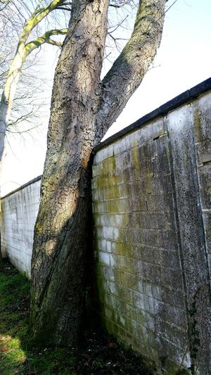 Tree Nature Naturepower Shadows Waiting For Spring White Outdoors No Stress Beautiful The Wall Landscapes With WhiteWall