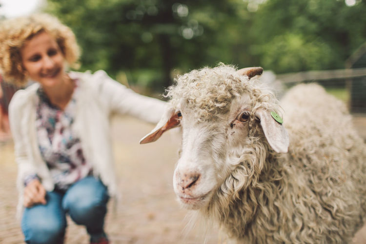 Curly Hair Domestic Animals Girl Herbivorous Pet Petting RAM Sheep Break The Mold Pet Portraits Connected By Travel