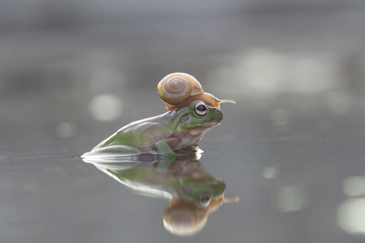 tree frog and mantis Animal Themes Animal Wildlife Animal One Animal Water Animals In The Wild Reflection Nature Close-up No People Day Selective Focus Vertebrate Outdoors Lake Focus On Foreground Waterfront Beauty In Nature Shell Animal Eye
