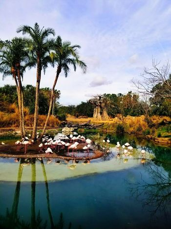 Trees Flamingo Elephant Safari Reflection Water Palm Tree Outdoors