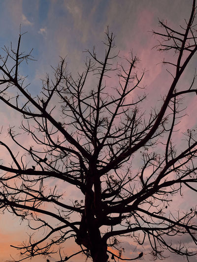 Low angle view of silhouette bare tree against sky at sunset
