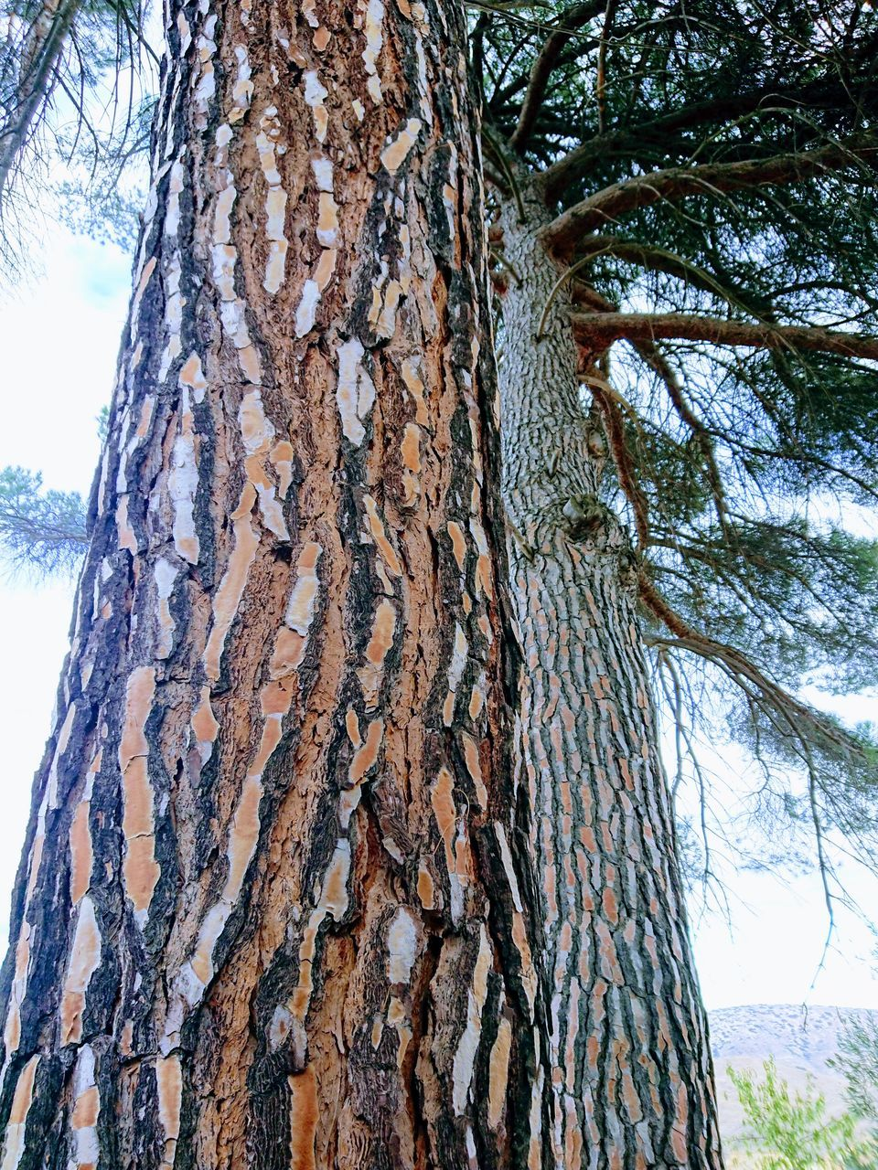 tree trunk, tree, nature, day, textured, bark, low angle view, no people, growth, rough, outdoors, branch, beauty in nature, close-up, marking, sky, dead tree