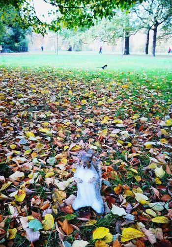 Pets Nature Outdoors LONDON❤ Saint James Park Squirrel Autumn Colors Lovely Travel