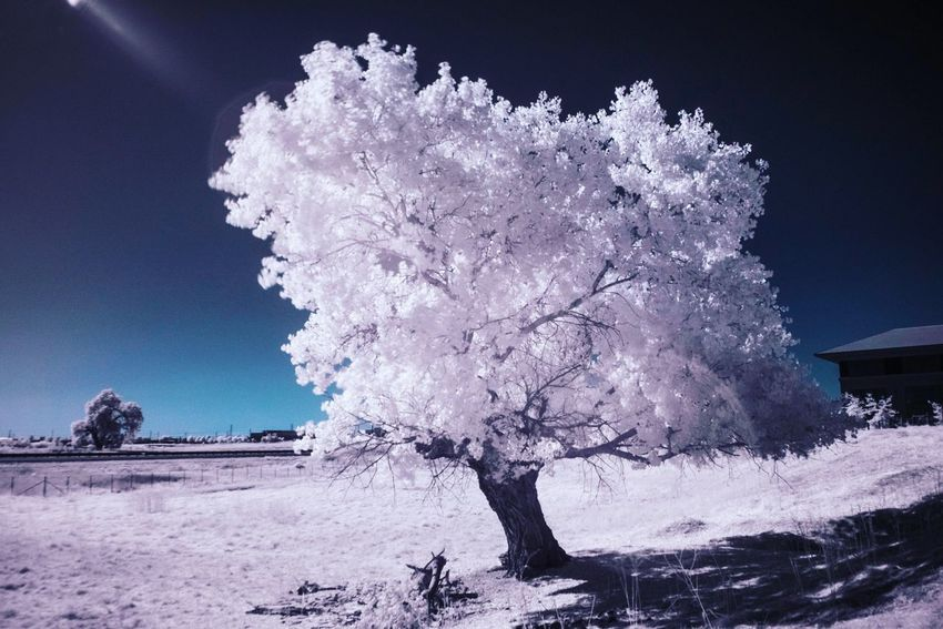 Tranquility Nature Beauty In Nature Landscape Tree Outdoors No People Sky Cold Temperature Day Freshness Infrared Infrared Photography Infrared Photo