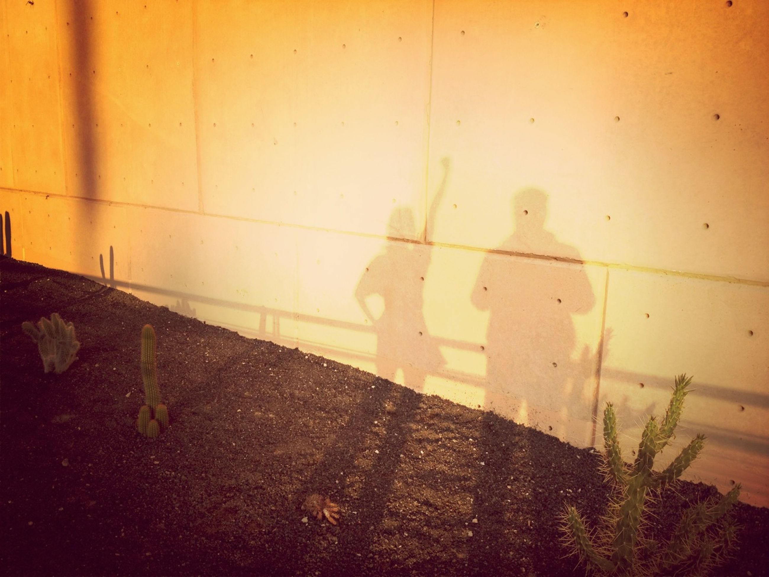 built structure, shadow, wall - building feature, architecture, sunlight, building exterior, outdoors, day, wall, street, focus on shadow, plant, sidewalk, walking, footpath, nature, high angle view