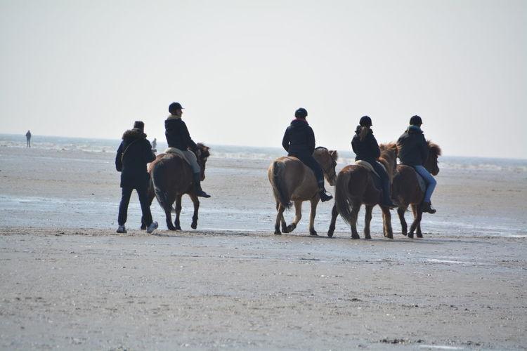 Day Domestic Animals Horseback Riding Landscape Leisure Activity Lifestyles Livestock Mammal Nature Outdoors Sky Working Animal