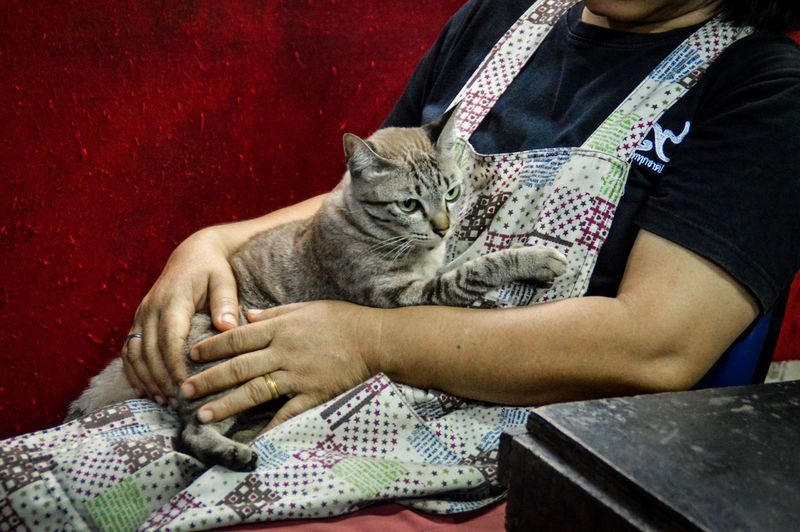 Midsection of woman holding a cute tabby cat