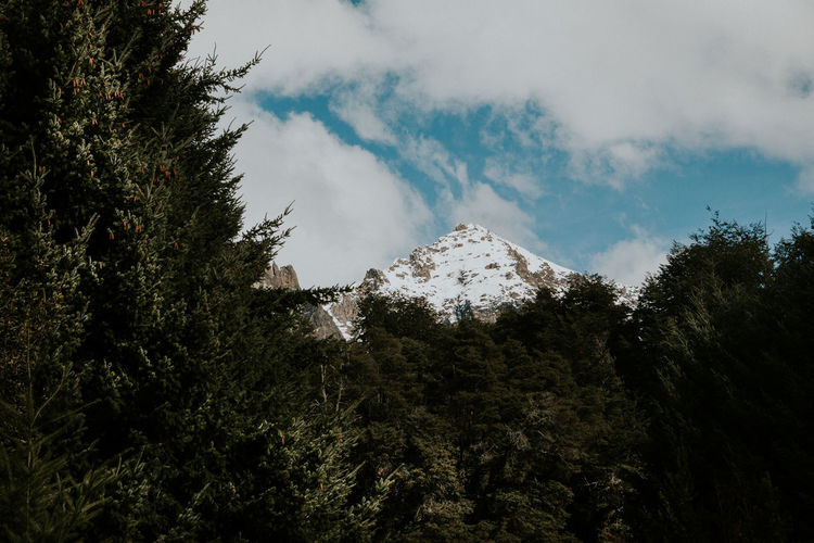 Snowcapped mountains by trees against sky