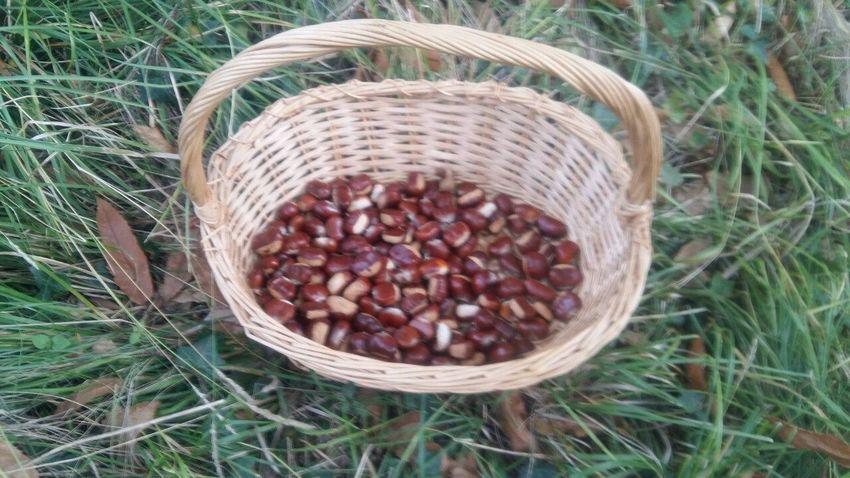 No Filter Basket Grass No People Nature