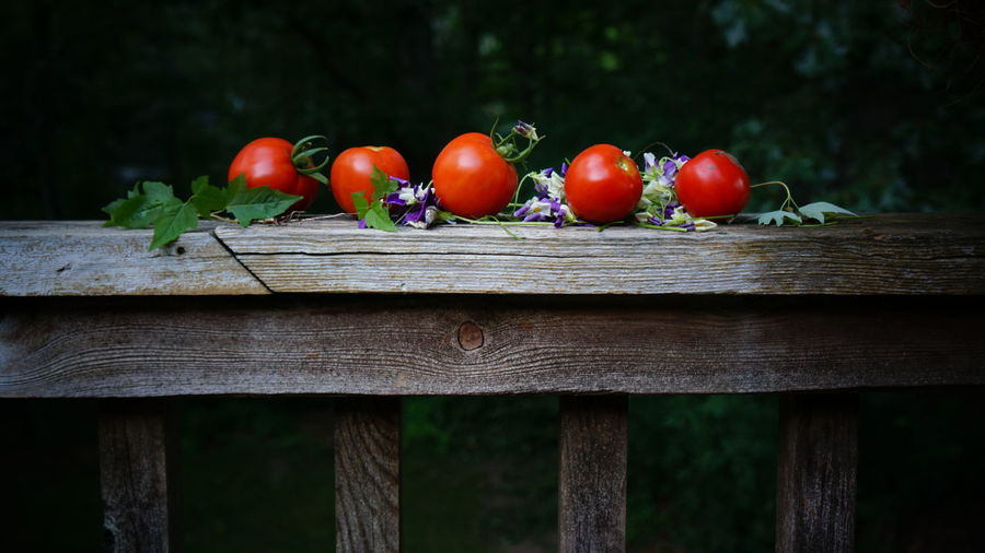 Tomato Harvest Bench Close-up Day Focus On Foreground Food Food And Drink Freshness Fruit Healthy Eating Nature No People Outdoors Plant Red Ripe Still Life Tomato Tree Vegetable Wellbeing Wood - Material The Traveler - 2018 EyeEm Awards The Still Life Photographer - 2018 EyeEm Awards