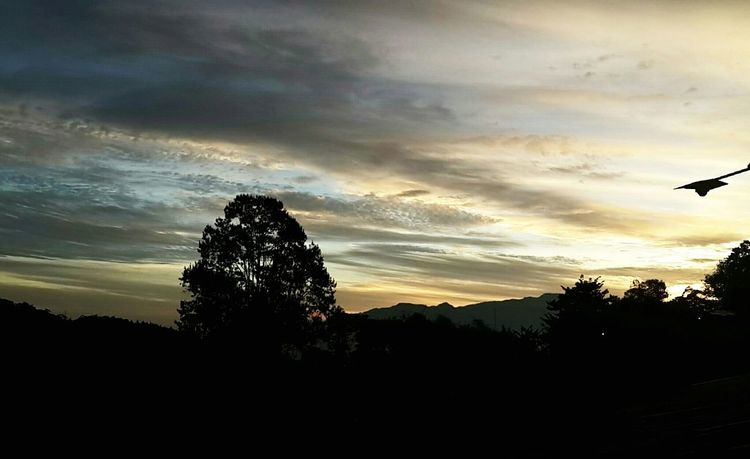 Tree Beauty In Nature Landscape Morning Sky Morning Sunrise Light And Shadow Magestic Sky EyeEm Gallery