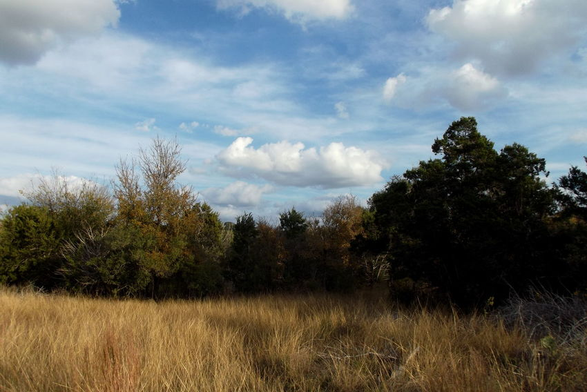 Travels through the Texas hill Country Motorcycle Photography Motorcycle Travel Texas Hill Country Trave Photography Travel Cloud - Sky Day Grass Landscape Motorcycle Camping Motorcycle Vagabond Lifestyle Nature No People Outdoors Sky Tranquility Tree