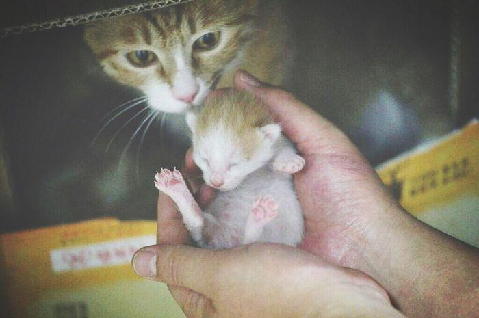 태어난지 8일차 카레 애기. 사진찍는게 왠지 불안한 카레 Curry Cat Cat Kitten