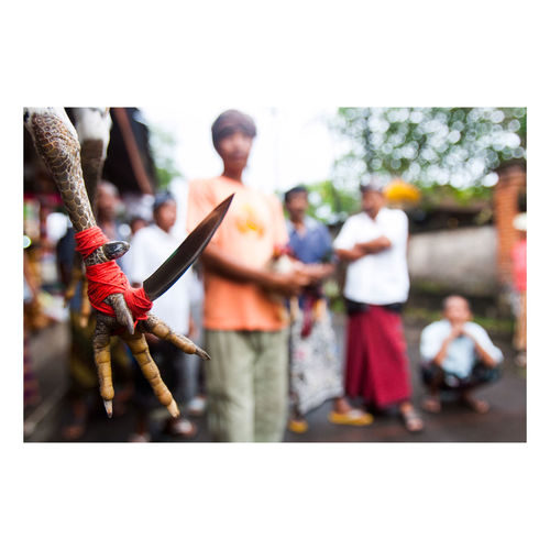 I Love My City The eye of a knife tied to a chicken's foot during a gambling game. It is common for men to do cockfight as it is part of Balinese culture Bali, Indonesia Balinese Life Sabung Ayam Asian Culture Ubud, Bali Eyemphotography INDONESIA Pulau Dewata Gambling