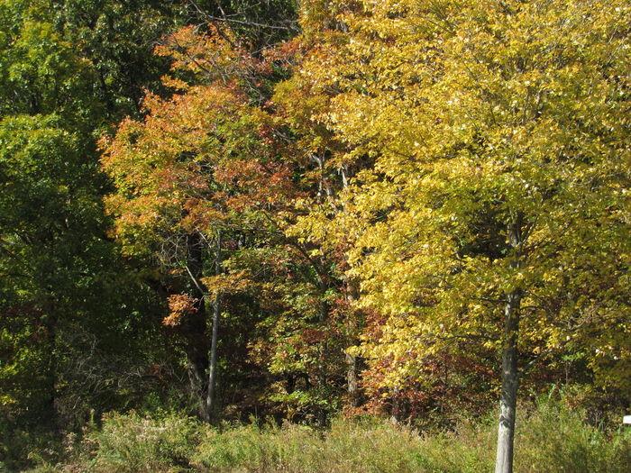 Autumn at the