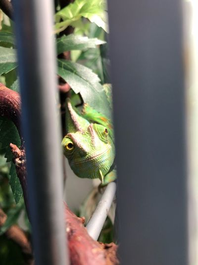 Reptile One Animal Animals In The Wild Green Color Animal Themes Animal Wildlife Lizard