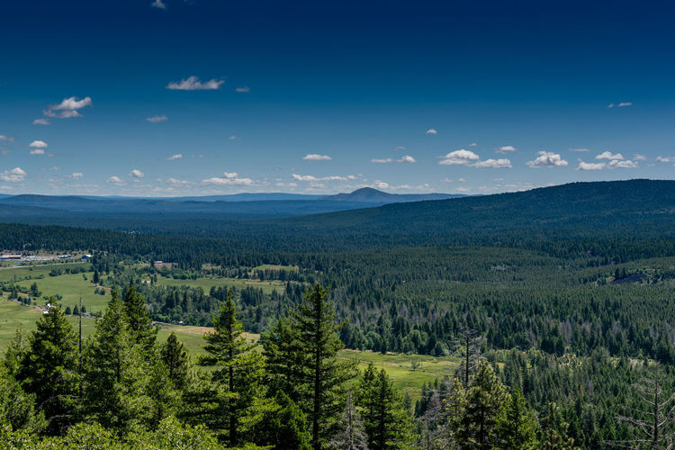 View from a vista point near Burney, CA, USA Scenics - Nature Sky Beauty In Nature Tree Tranquil Scene Tranquility Plant Landscape Environment Green Color No People Non-urban Scene Mountain Nature Day Cloud - Sky Idyllic Growth Blue Outdoors Land Vista Panorámica Pine Forest Cascade Range Modoc County