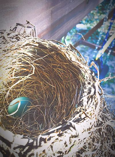 Perfect Nest Spring Has Arrived Robins Nest Close-up Natures Architecture